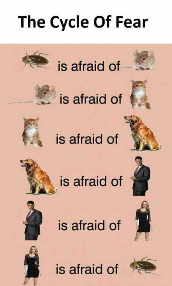 Cycle of fear.jpg