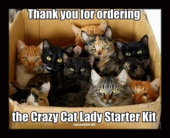 the_crazy_cat_lady_starter_kit_by_kennerz27-d5wjl3i.jpg