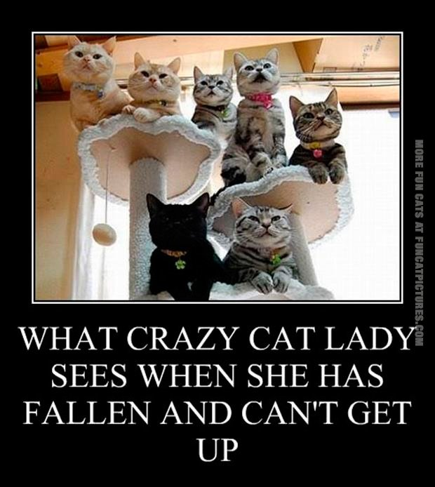 funny-cat-pics-what-crazy-cat-lady-sees.jpg